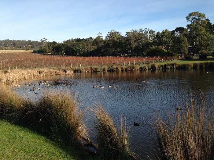 Boutique Wine Tours Tasmania Puddleduck