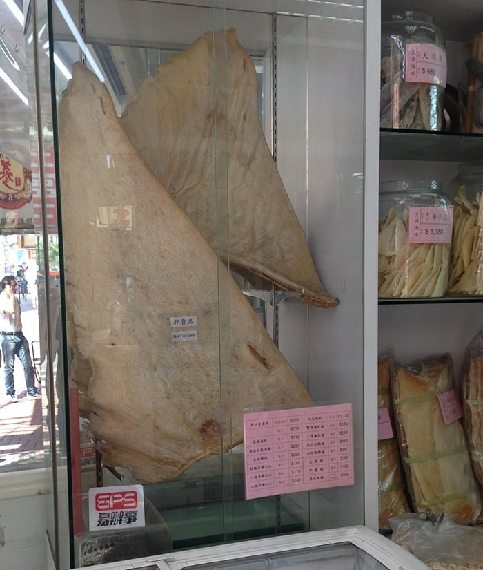 Little Adventures Food Tour Hong Kong Shark Fin